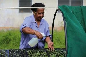 Ma watering seedlings