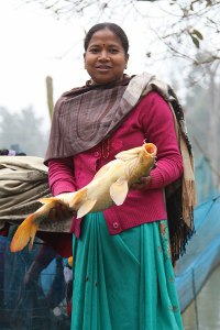 Sarita - fish from farm